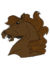 imagem cabeça de cavalo