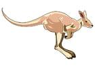 imagem canguru