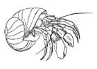 Página para colorir caranguejo-eremitão