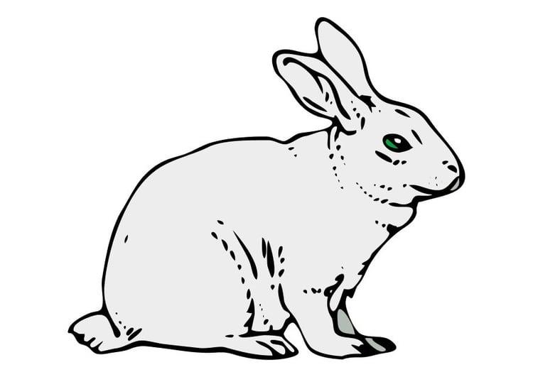 imagem coelho  imagens grátis para imprimir