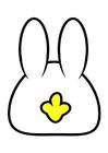 imagem coelho -pate de trás