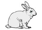 imagem coelho