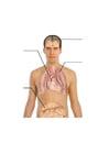 imagem corpo humano