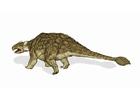 imagem dinossauro - anquilossauro 2