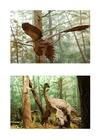 imagem dinossauro com penas