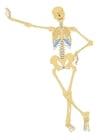 imagem esqueleto