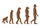 imagem evolução humana