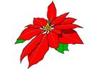 imagem flor-de-natal