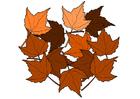 imagem folhas de outono