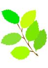 imagem folhas de primavera