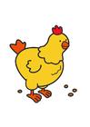 imagem galinha