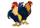 imagem galo e galinha