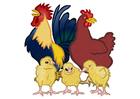 imagem galo, galinha e pintos