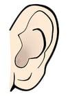 imagem orelha - silêncio
