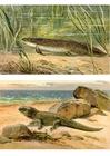 imagem os primeiros animais vem para a terra