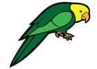imagem papagaio