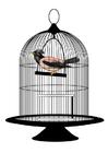 imagem passarinho na gaiola