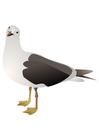 imagem pássaro - gaivota