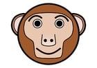 imagem r1 - macaco