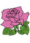 imagem rosa