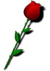 imagem rosa vermelha