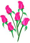 imagem rosas