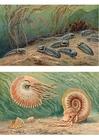 imagem Trilobites e Ammonoids