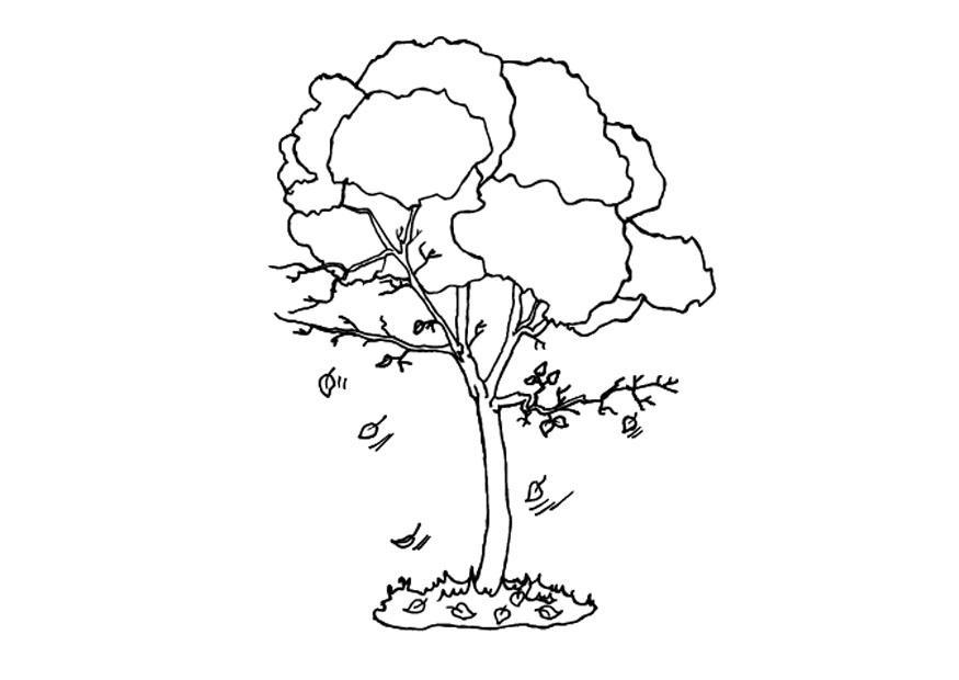 Página Para Colorir árvore No Outono