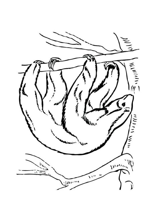 página para colorir bicho preguiça img 12530