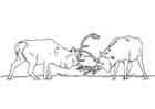 Página para colorir briga de cervos