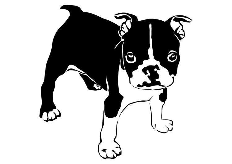 página para colorir cachorro buldogue francês img 27821