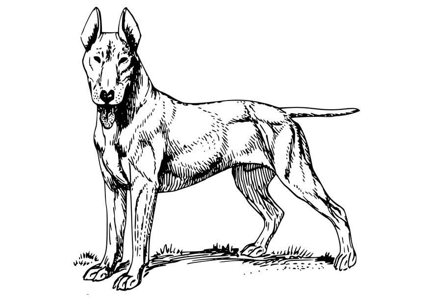 Kleurplaten Volwassenen Hond.Kleurplaten Voor Volwassenen Honden Kleurplaten Hond Kleurplaten
