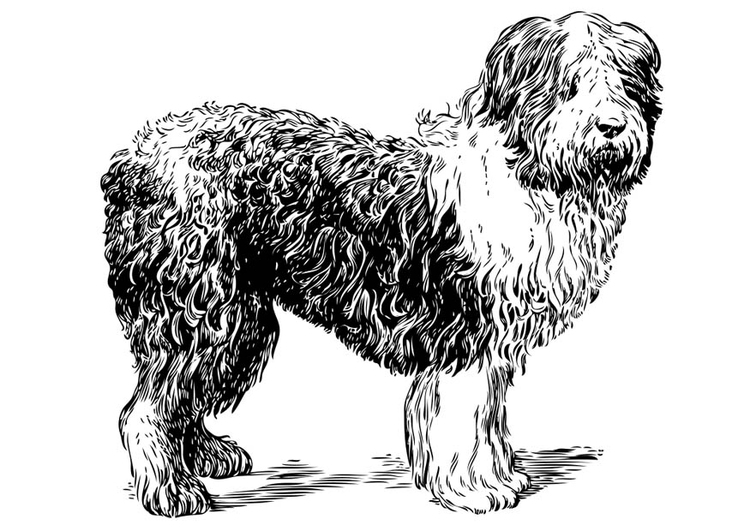 página para colorir cachorro pastor polonês da planície img 17405