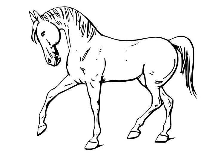 P gina para colorir cavalo img 10346 for Disegni cavalli alati
