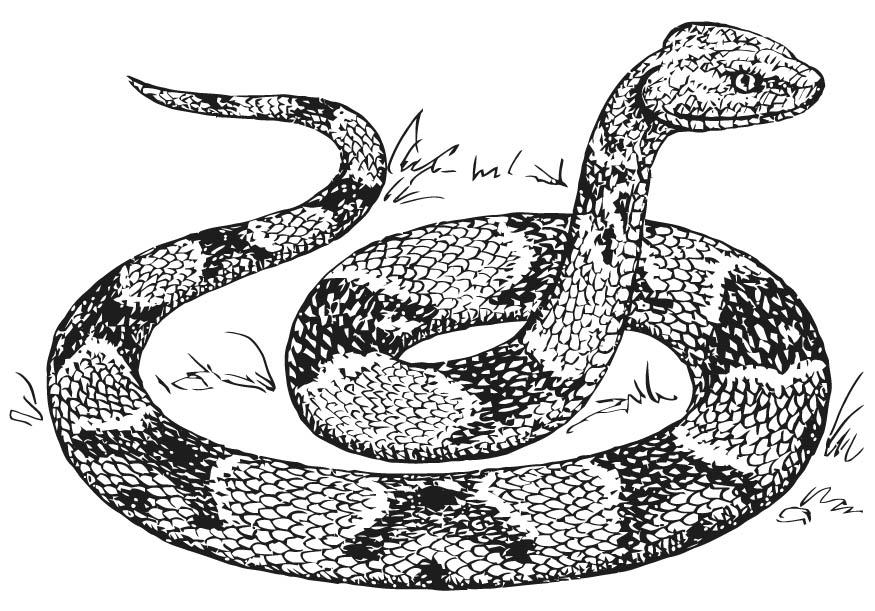 complicated coloring pages snake - photo#3