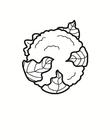 couve-flor