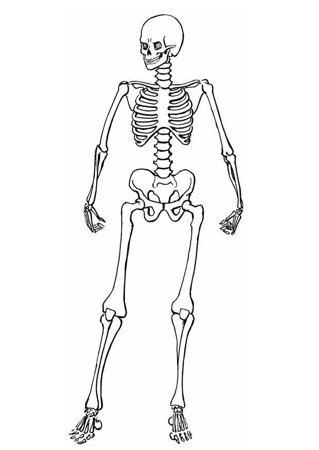 p u00e1gina para colorir esqueleto