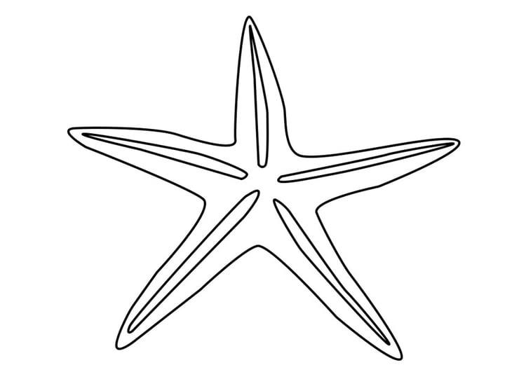 Página Para Colorir Estrela Do Mar