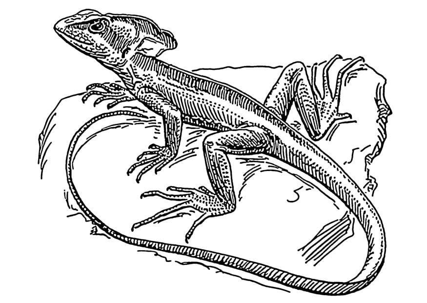 P gina para colorir lagarto basilisco img 18908 images - Coloriage lezard ...