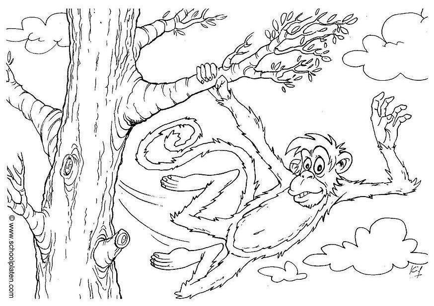 Página Para Colorir Macaco