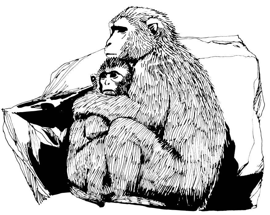 Página Para Colorir Macacos