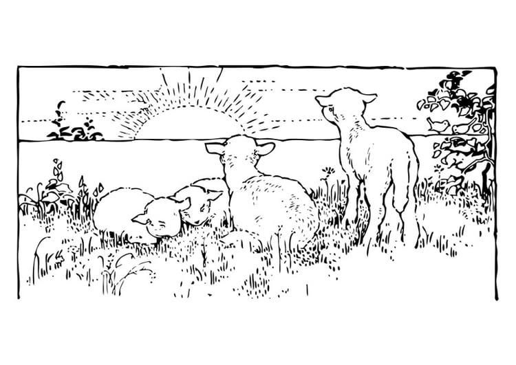 página para colorir paisagem com ovelhas img 27460