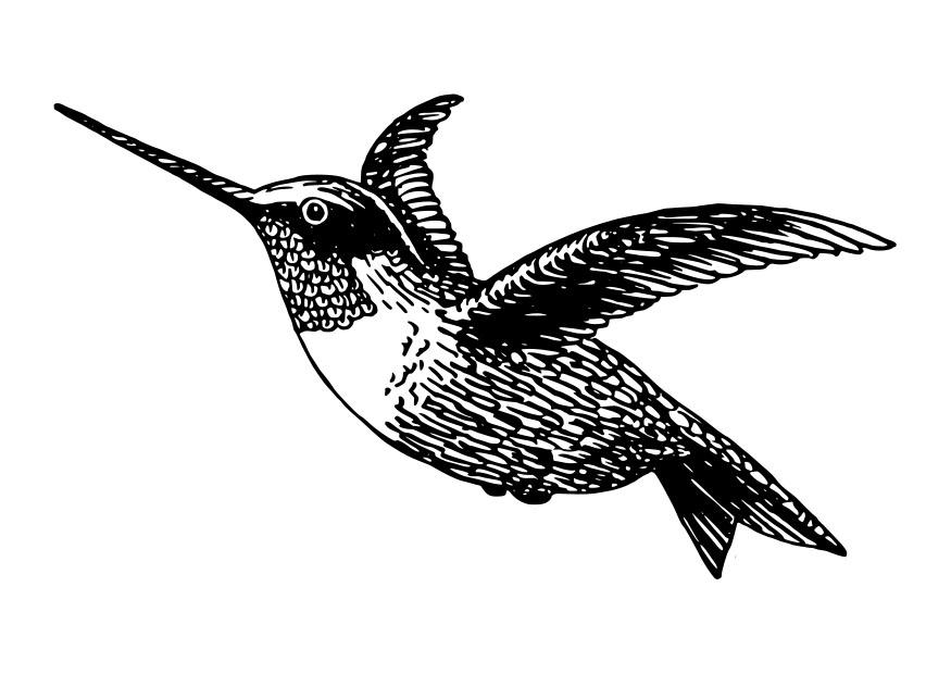 Dibujo Para Colorear Ave Colibri Hummingbird Stencil - CLM: Căutați ...