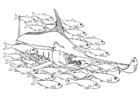 peixe espada em cardume