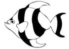 Página para colorir peixe