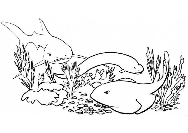 Imagens Para Colorir Peixe: Página Para Colorir Peixes E Tubarão