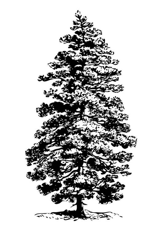 página para colorir pinheiro img 17343