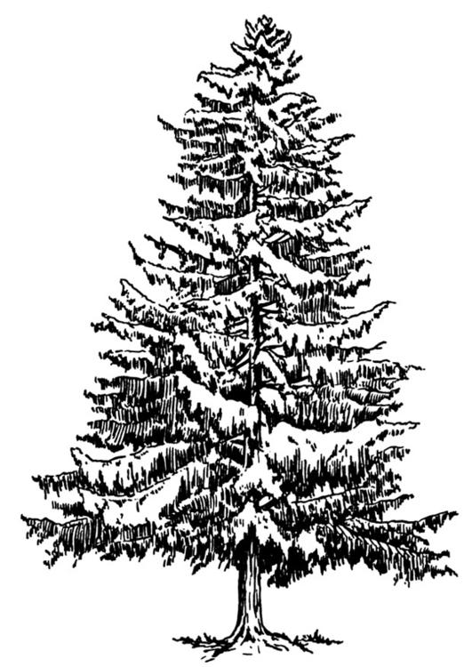 página para colorir pinheiro do inverno img 12937