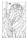 Página para colorir protea