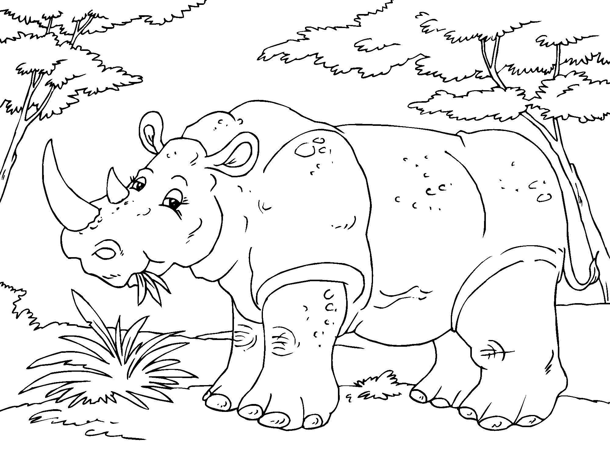 P 225 Gina Para Colorir Rinoceronte Img 23016